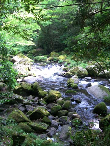 阿蘇の渓谷