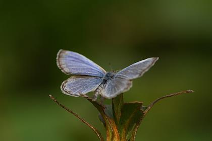 蝶がとまる