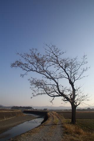 どこかにある、どこかへ続く道と、あの日も立っていた木