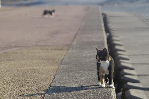 子猫、立ち止まる。