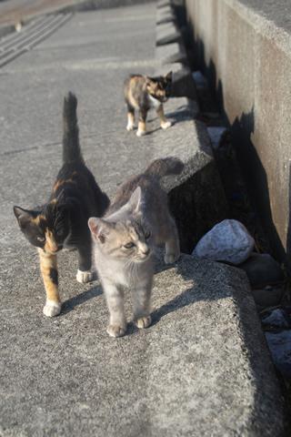 子猫、群れる。
