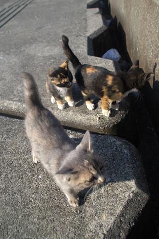 子猫、様子を伺う。