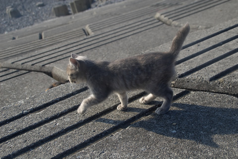 子猫、走り出す。