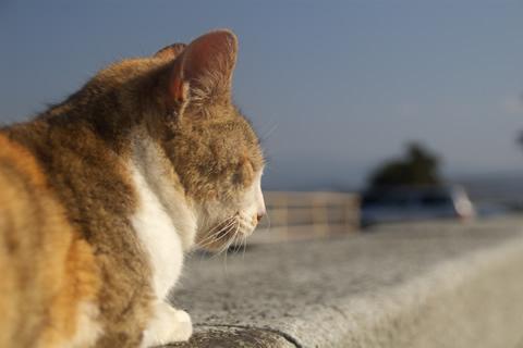 猫の見つめる先には