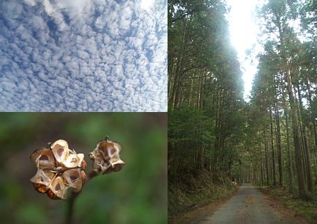 羊雲と狸のお金と杉木道と。