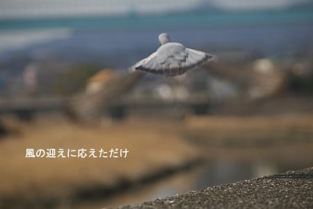 鳩、飛びましたぁよー