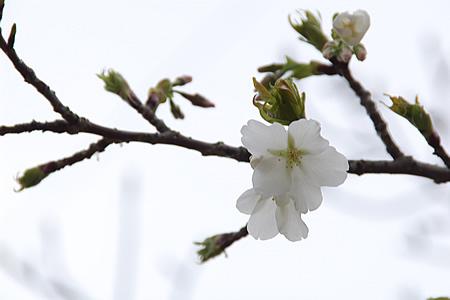 白い花、何て花?