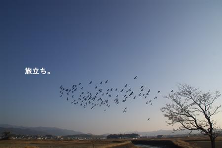 鳥の旅立ち・・・飛び立ち?