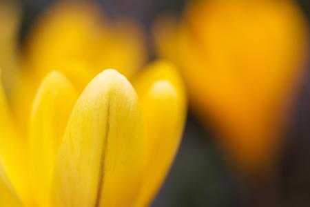 名前は知らないけど・・・黄色い花