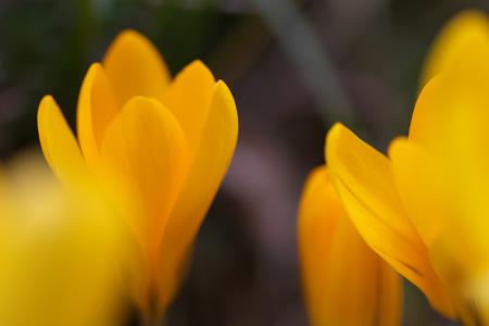 だけど綺麗な黄色い花