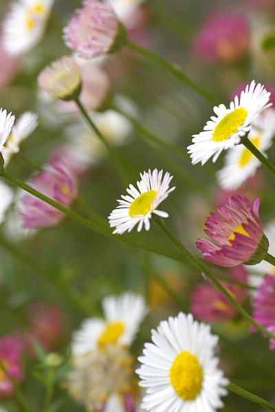 さわやかな風に揺れる花