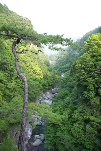 「雨竜の滝」途中の展望台より