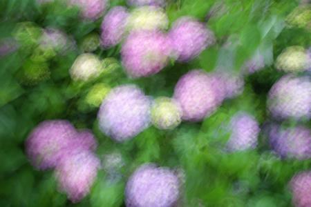 紫陽花抽象画