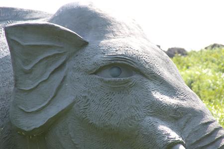 魅惑の目?親象の瞳アップ