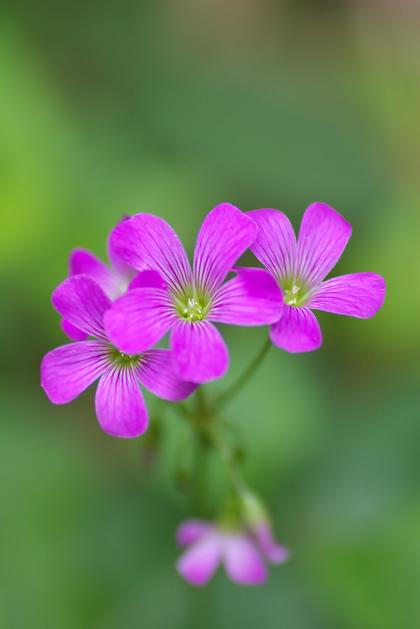 野山に咲く花