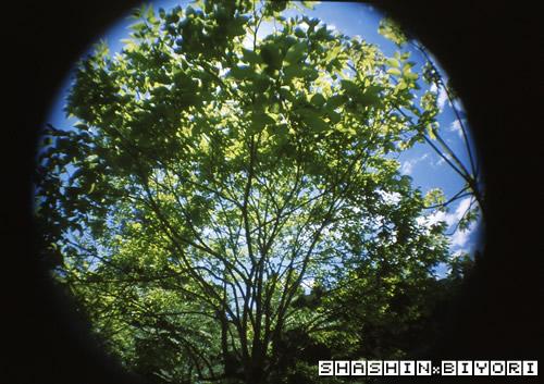 太陽光線は木陰で避けて・・・