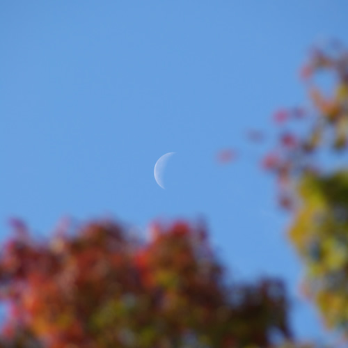 秋の紅葉、昼間の月。