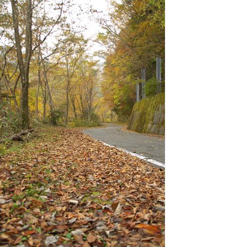 道沿いに落ち葉