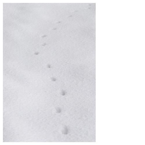 雪原に残る来訪者の足跡