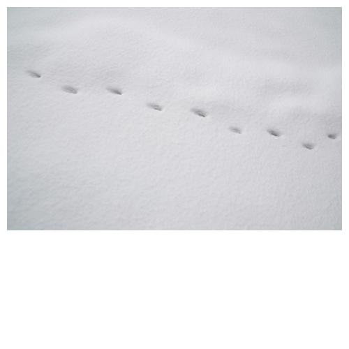 雪原の足跡アート