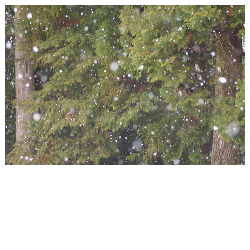 積もるよ積もる、白い雪。