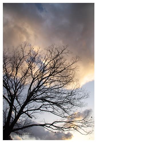 薄明るい空と木のシルエット