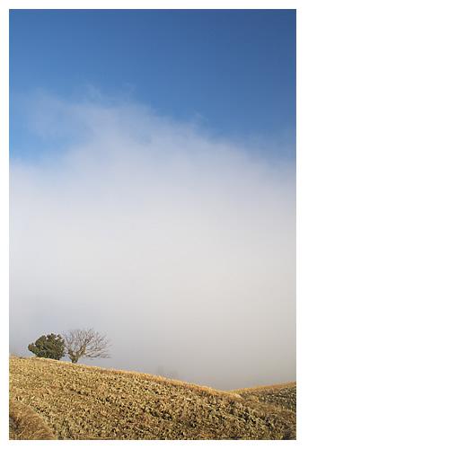 白煙湧く風景を見つめる二本