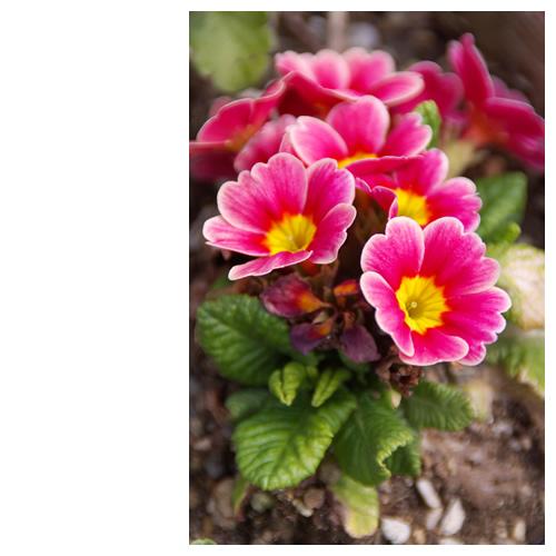 春になり庭に花が咲き始めた・・・が