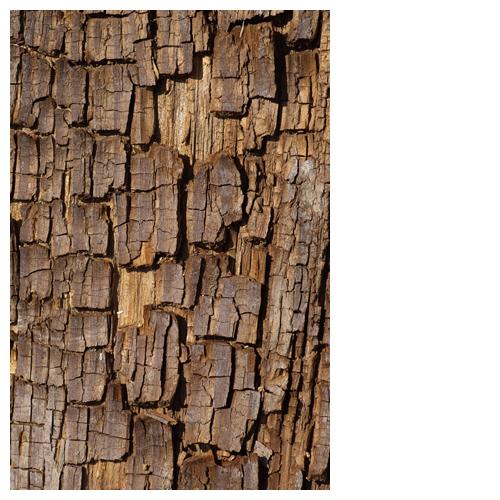 木の断片「パリパラ」