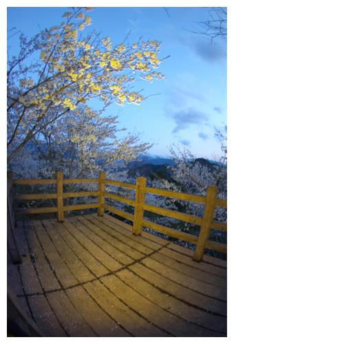 青白い空と桜を望む