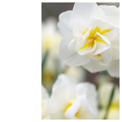 白い花と「もっと知りたいじゃんバトン」