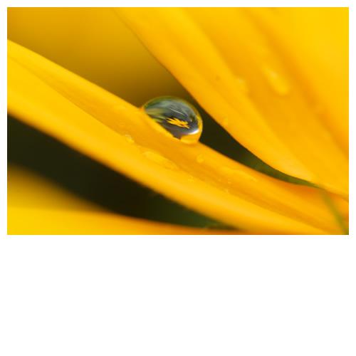 水滴カプセル・ルドベキア