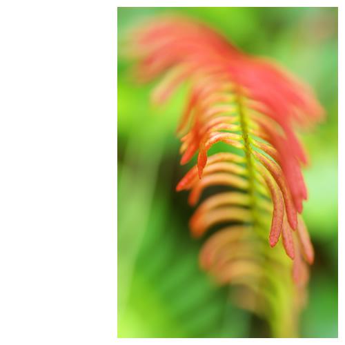 紅くブレる植物