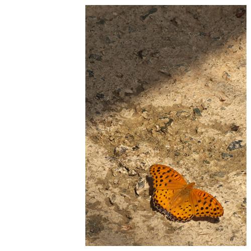 蝶の羽休め