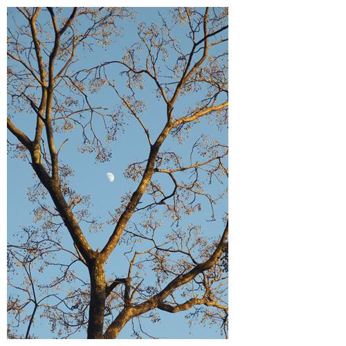 夕焼け樹木と空の白月