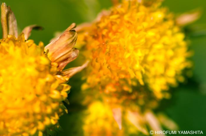 黄色と緑の滲み