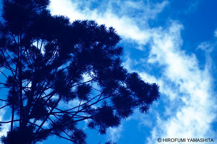 ボンボンした木と空と雲
