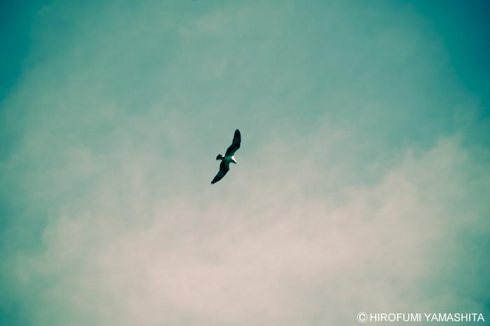 空を舞う鳥。