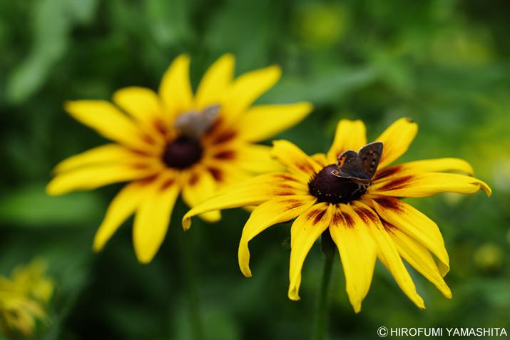 蝶々と仲良しこよし♪黄色いアイツ。
