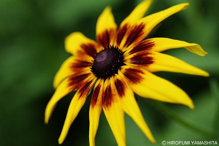 この季節に咲く黄色いアイツ。