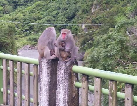 猴媽媽好像喝醉了XD