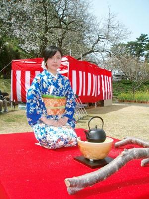 黄金崎桜祭り2