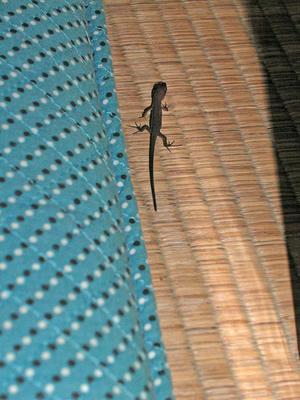 カナヘビの幼体