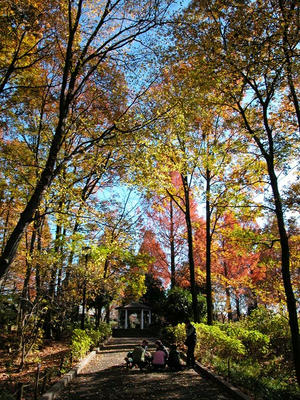 相模原北公園-紅葉の木漏れ日道