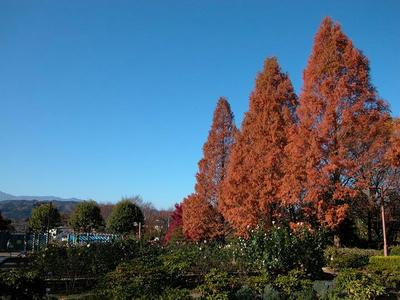 晩秋の相模原北公園-青空にそびえる