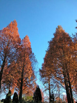 晩秋の相模原北公園