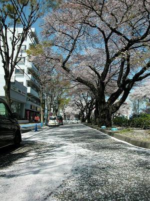 相模原の桜2011/4/14