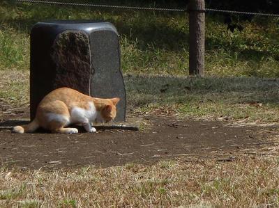 猫@相模原北公園