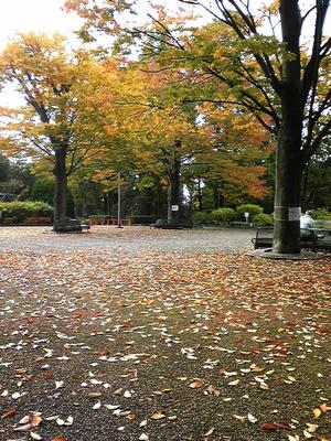 相模原北公園の秋