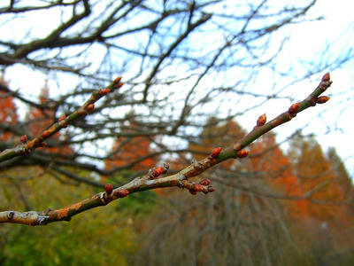 相模原北公園の春の兆し